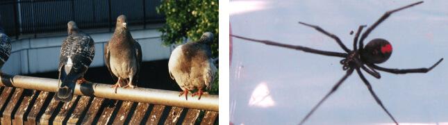 外来種・不快害虫・有害鳥獣、他
