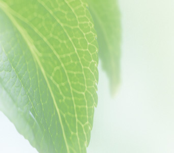 微生物対策の専門集団 イカリステリファーム